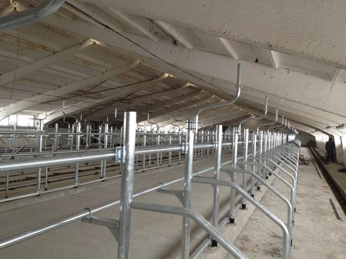 Стойловое оборудование для привязного содержания коров